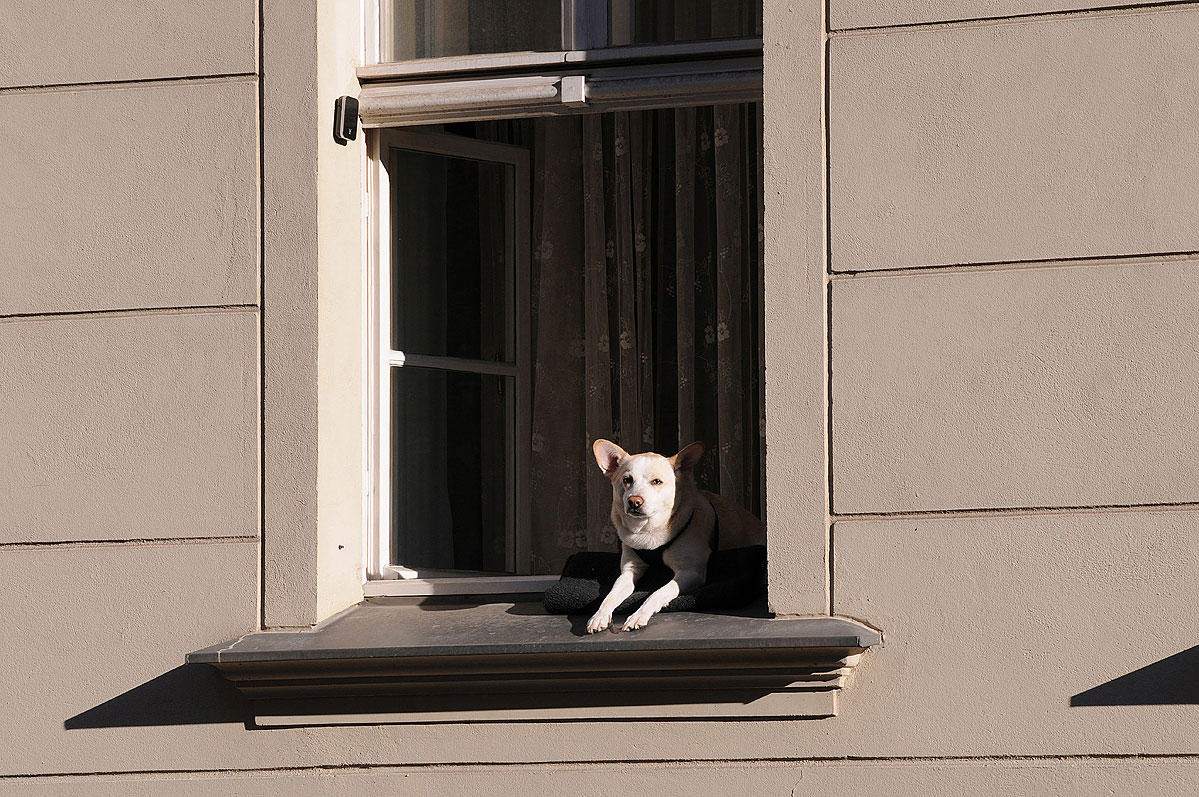 lebenszeichen-the-signs-of-life-fenster-hund-2-by-daniel-zakharov