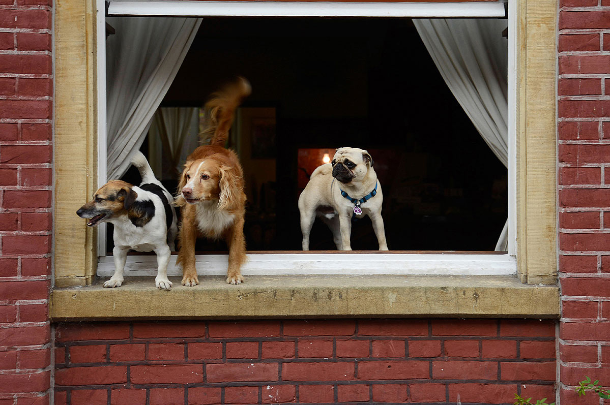 lebenszeichen-the-signs-of-life-fenster-hunde-by-daniel-zakharov