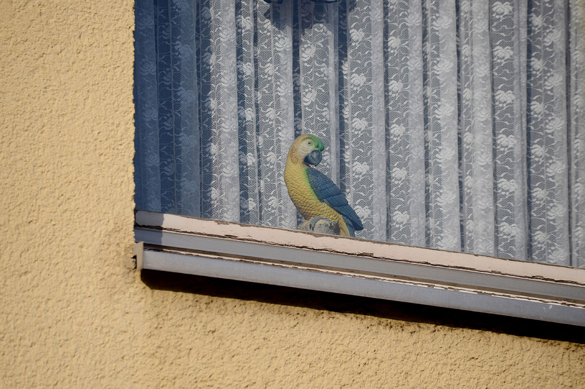 lebenszeichen-the-signs-of-life-fenster-vogel-papagei-by-daniel-zakharov